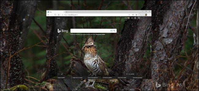 A Bing photo of a bird as a Windows 10 desktop background.