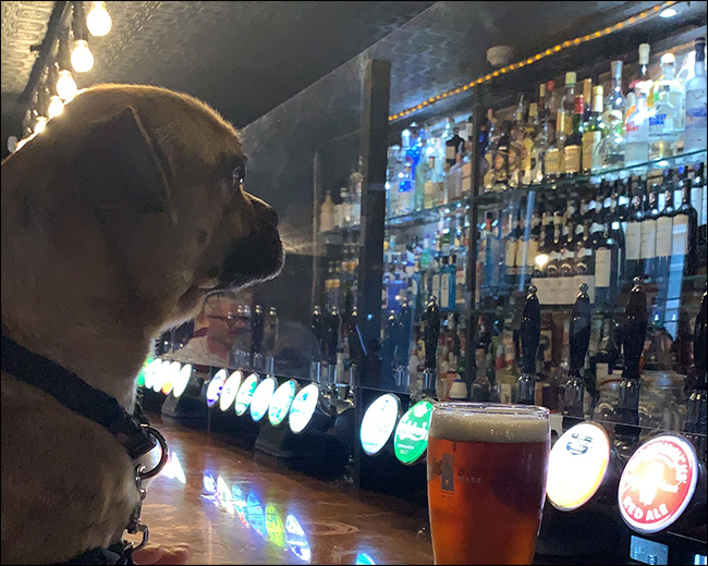 Image of a dog sitting at a bar with ISO blur.