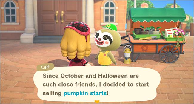 Leif pumpkin starts acnh