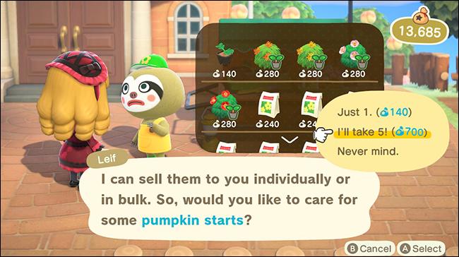 anch leif pumpkin starts